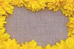 Рамка желтого цвета цветет rudbeckia против предпосылки грубой Стоковое Изображение RF