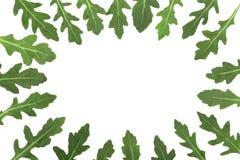 Рамка зеленых свежих лист rucola или arugula изолированных на белой предпосылке с космосом экземпляра для вашего текста Взгляд св Стоковые Фото
