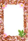 Рамка зерен чая, высушенных одичалых лепестков розы и свежего цветка Стоковые Изображения