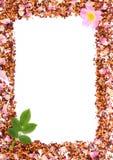 Рамка зерен чая, высушенных одичалых лепестков розы и свежего цветка, копирует космос для текста Стоковое Изображение