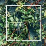 Рамка зеленых листьев, взгляд сверху плана Природа вегетации Стоковое Фото