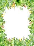Рамка листьев акварели тропическая Стоковое Изображение