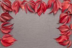 Рамка листьев осени рыжеватая Стоковые Изображения