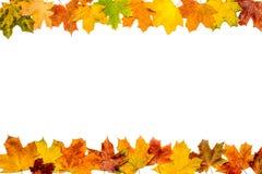Рамка листьев осени Стоковое Изображение