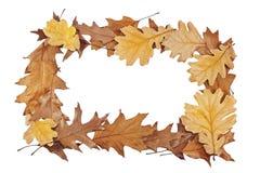 Рамка листьев дуба Стоковые Фотографии RF