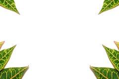 рамка 7 листьев Стоковые Фотографии RF