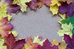 Рамка кленовых листов Стоковые Фото