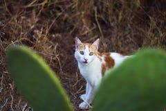 Рамка кота стоковая фотография rf