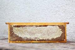 Рамка крапивницы пасеки с пчелами вощиет структуру вполне свежего меда пчелы в сотах изолировано Открытый космос для вашего текст стоковое изображение