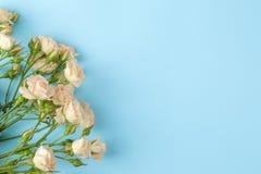 Рамка красивых мини роз на яркой голубой предпосылке красивейшие цветки праздники над взглядом стоковая фотография