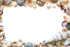 Рамка красивых различных seashells изолированных на белой предпосылке с космосом для текста Текстура seashell наяды стоковое фото rf