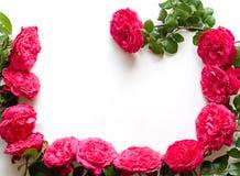 Рамка красивых роз Стоковые Изображения