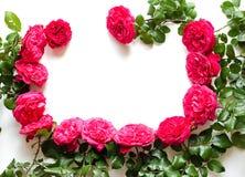 Рамка красивых роз Стоковое Изображение RF