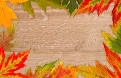 Рамка красочных листьев стоковое фото rf