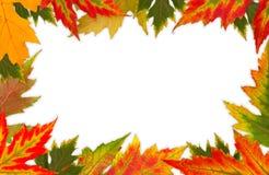 Рамка красочных листьев Стоковое Изображение RF