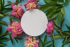 рамка круглая Розовые пионы на голубой предпосылке Стоковая Фотография