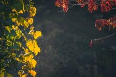 Рамка листьев выделенных солнцем Стоковое Фото