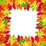 Рамка листьев осени красочная также вектор иллюстрации притяжки corel Стоковые Изображения