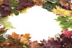 Рамка листьев осени на белой предпосылке Стоковая Фотография RF