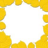 Рамка листьев осени на белых падая тенях Стоковое Фото