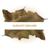 Рамка листьев Стоковое Изображение