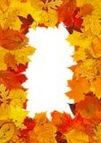 Рамка листьев стоковые фотографии rf