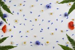 Рамка маков красного поля, маргариток, cornflowers и листьев зеленого цвета на белой предпосылке Стоковая Фотография