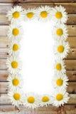 Рамка: маргаритки на деревянной предпосылке Стоковая Фотография