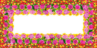 Рамка дня рождения лета флористическая Стоковые Изображения