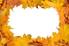 рамка обрамляет серию природы листьев Стоковое Изображение RF