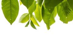 рамка обрамляет серию природы листьев Стоковое Фото
