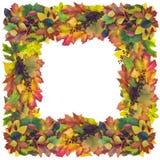 Рамка осени квадратная Стоковое Изображение