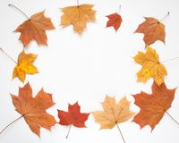 Рамка осени с листьями на белой предпосылке Стоковая Фотография RF
