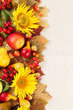 Рамка осени с плодоовощами, тыквами и солнцецветами Стоковое Изображение