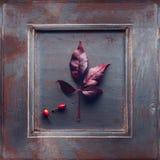 рамка осени яблока красивейшая флористическая выходит изображение орнамента Стоковые Фотографии RF