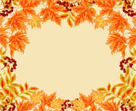 Рамка от вектора темы осени ягоды и клена рябины листьев Стоковые Изображения