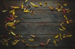 Рамка от высушенных лепестков цветков Стоковое фото RF
