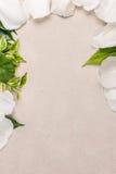 Рамка от лепестков и зеленого цвета выходит против листа бумаги Стоковое Фото