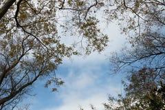 Рамка от желтых листьев на предпосылке облаков, небе стоковое изображение rf