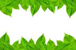 Рамка от зеленого цвета выходит на белую предпосылку для изолированный Стоковые Фотографии RF