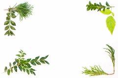 Рамка от листьев Стоковое Изображение