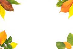 Рамка от листьев Стоковые Фотографии RF