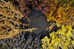 Рамка от сухих цветков трав Ароматерапия целебно стоковая фотография rf