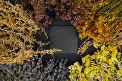 Рамка от сухих цветков трав Ароматерапия целебно стоковые фотографии rf