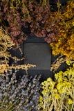 Рамка от сухих цветков трав Ароматерапия целебно стоковые изображения