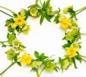 Рамка от цветков предпосылки белизны Narcissus и морозника Стоковое Изображение RF
