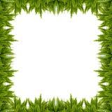Рамка папоротника шпаги клубня Стоковая Фотография