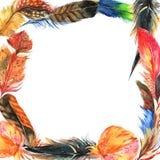 Рамка пера птицы акварели от крыла Стоковое Фото