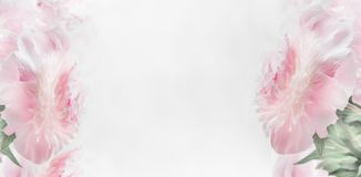 Рамка пионов пастельного пинка флористическая на светлой предпосылке, знамени План или поздравительная открытка на день матерей Стоковое Фото