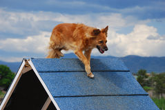 -рамка подвижности собаки Стоковые Изображения